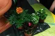 Sadzimy kwiaty!